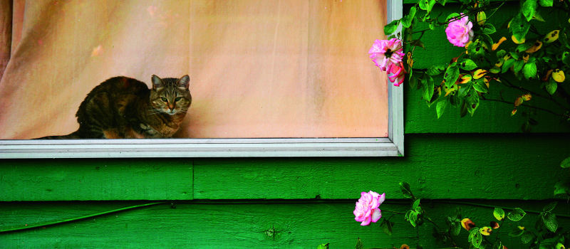 cat_window